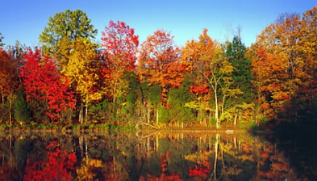 autumn_trees
