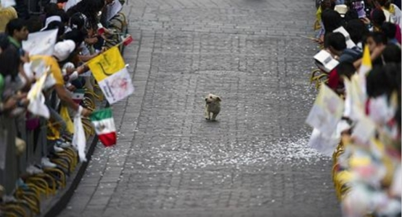 dog_5_minutes