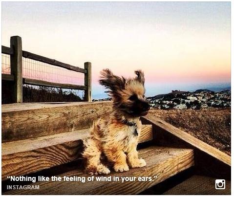 windy_dog