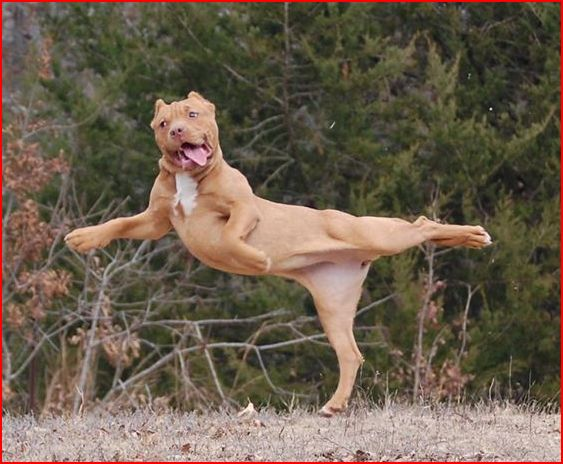 stretch_dog