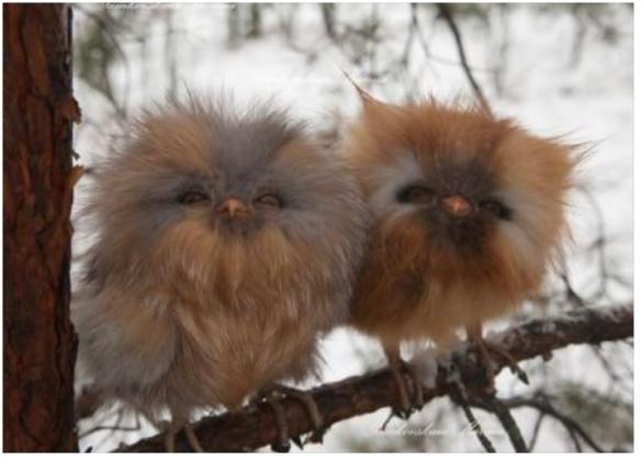 bird_fluffy