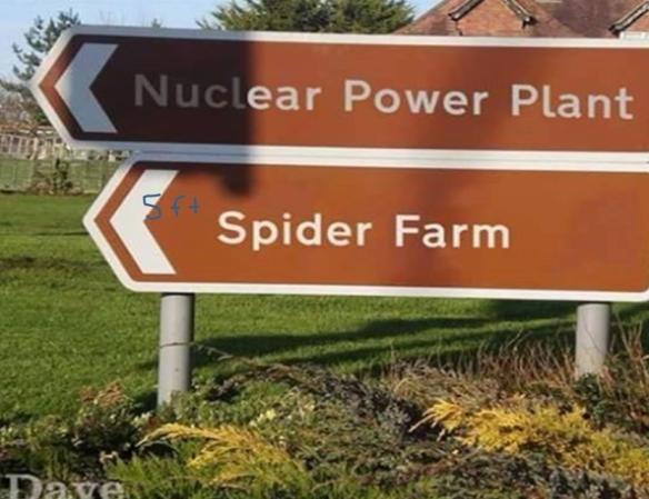 spider_farm