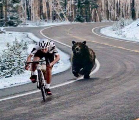 bike_bear_race