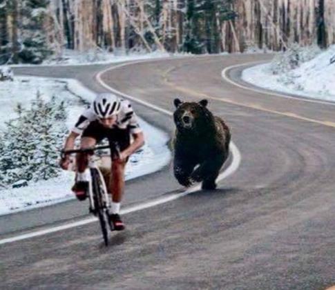 bike_bear_race