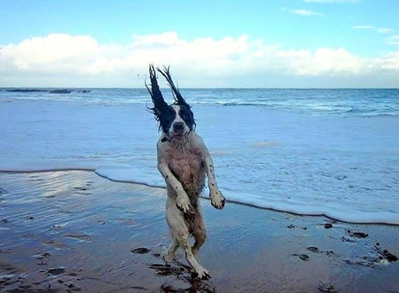 dog_walk_on_beach