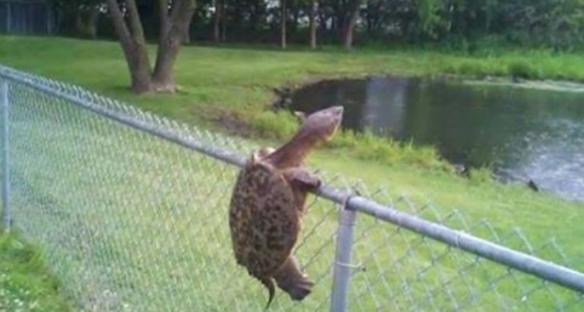 turtle_fence