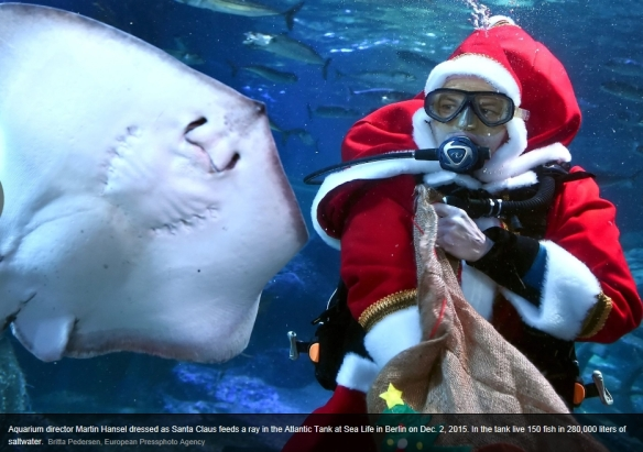 santa_and_stingray