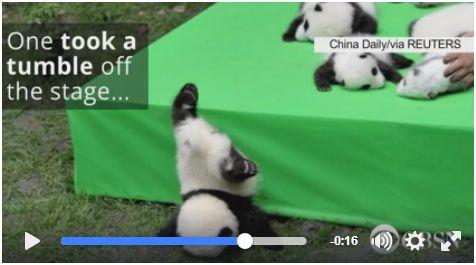 panda_fall